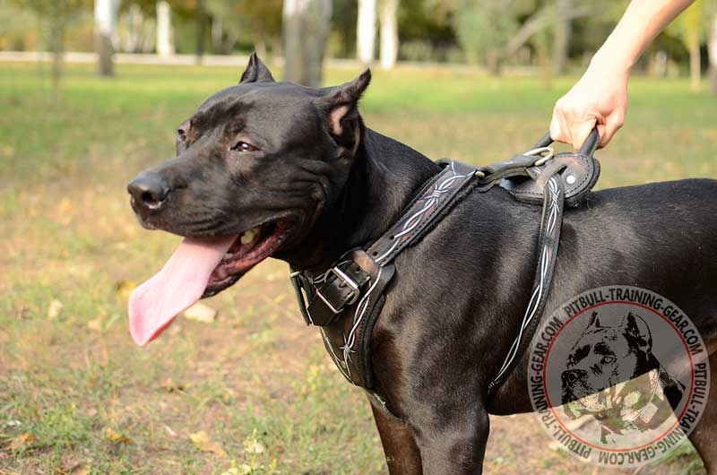 Get Designer Handmade Leather Dog Harness | Pitbull Walking Gear