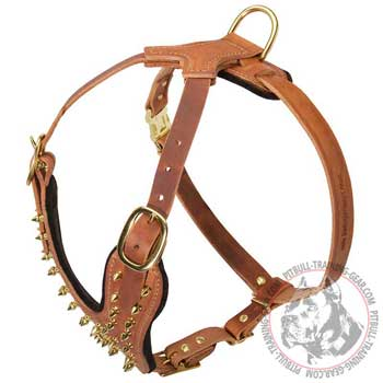 Spiked Leather Harness for Pitbull with Goldish Brass Hardware