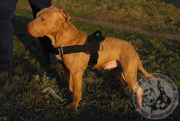 Handcrafted Light-Weight Training Nylon Harness for Pitbull