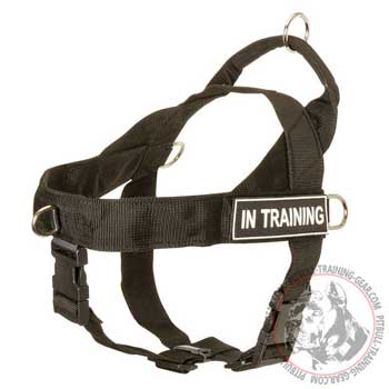 Service Nylon Harness for Pitbull with front D-ring
