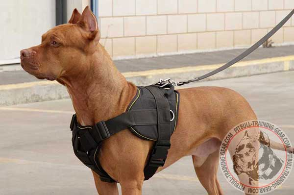Lightweight Pitbull harness made of nylon for pulling