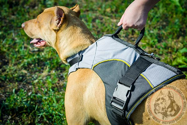 Pitbull nylon harness of high quality with handle for any activity