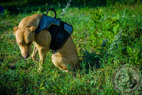 Pitbull nylon harness of lightweight material with nickel plated hardware for daily walks
