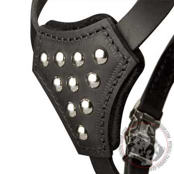 Small Studded Chest Plate on Leather Dog Harness for Puppy