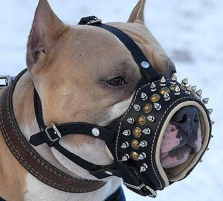 Durable Leather Pitbull Muzzle Spiked Padded with Soft Nappa