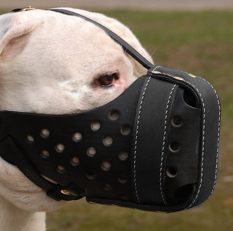 Best Dog Muzzle For Fighting