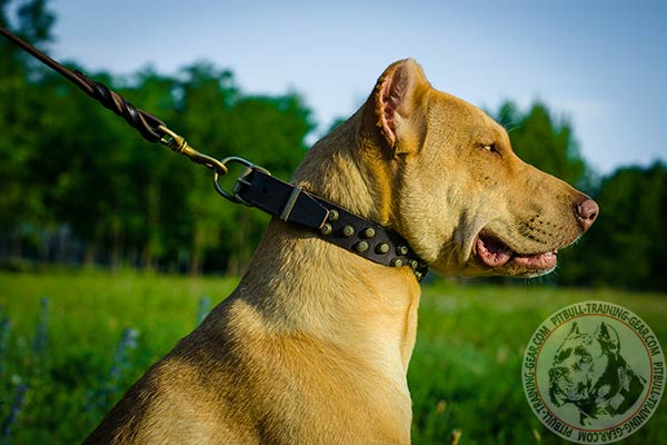 Pitbull leather leash with durable brass plated hardware for improved control