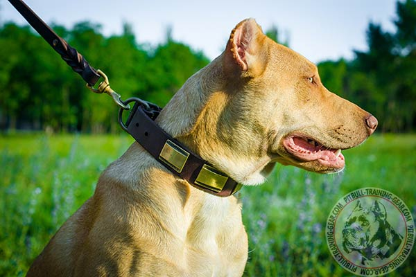 Pitbull leather leash with non-corrosive hardware for any activity