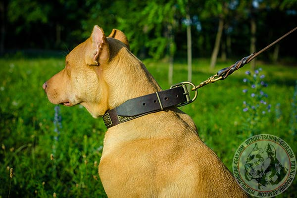 Pitbull leather leash with corrosion resistant brass plated hardware for perfect control