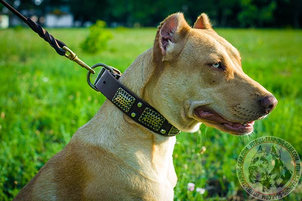 Pitbull leather leash with rust-proof hardware for basic training