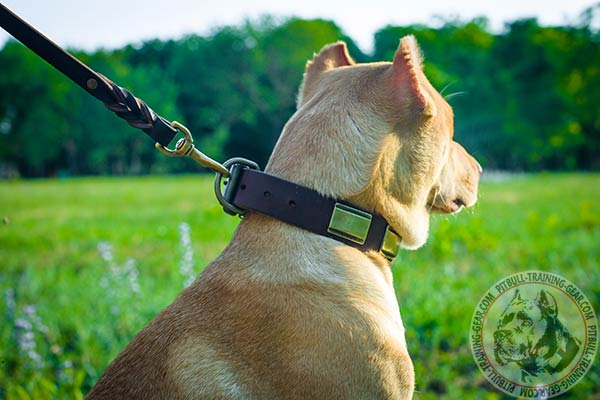 Pitbull leather leash with rust-resistant brass plated hardware for professional use