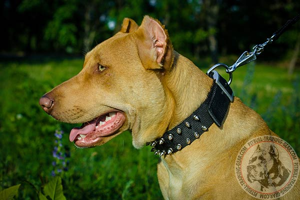 Pitbull nylon leash of lightweight material with nickel plated hardware for better comfort