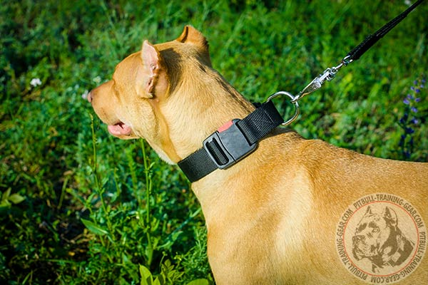 Pitbull nylon leash of lightweight material with handle for walking