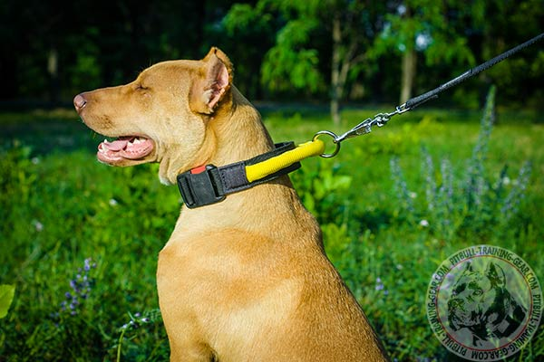 Pitbull nylon leash Nappa padded handle for improved control