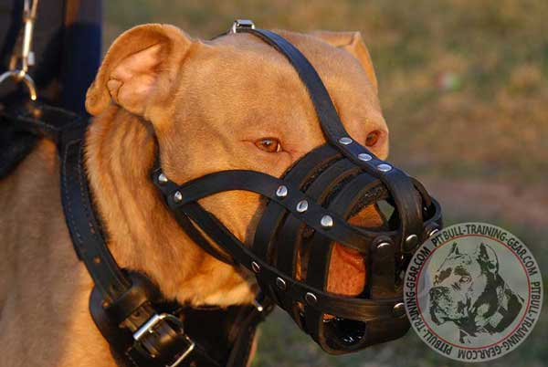 American Pitbull Muzzle Walking Light