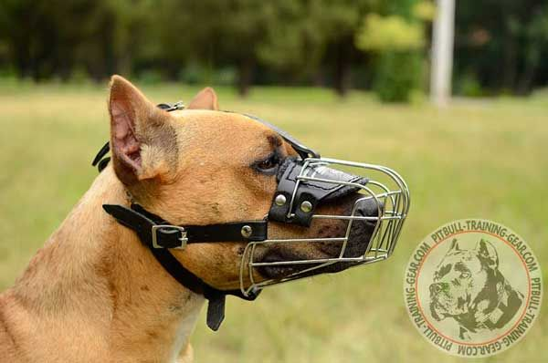 American Pitbull Muzzle with Good Air Flow