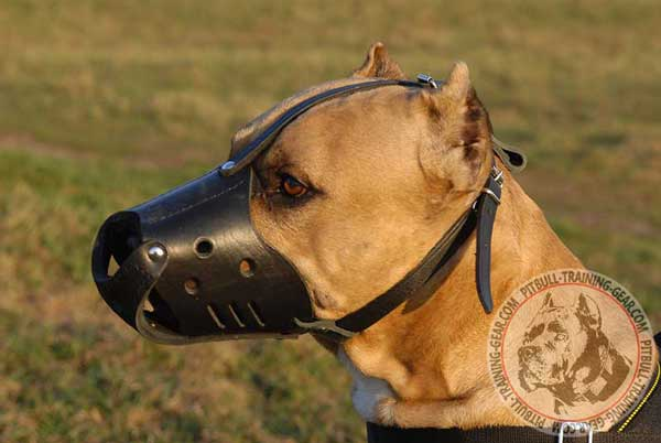 American Pitbull Muzzle Anti-Barking Training
