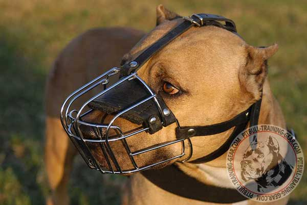 Cage Muzzle for Pitbull with Optimal Comfort