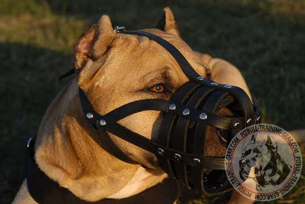 Leather Muzzle for Pitbull with Nose Padding