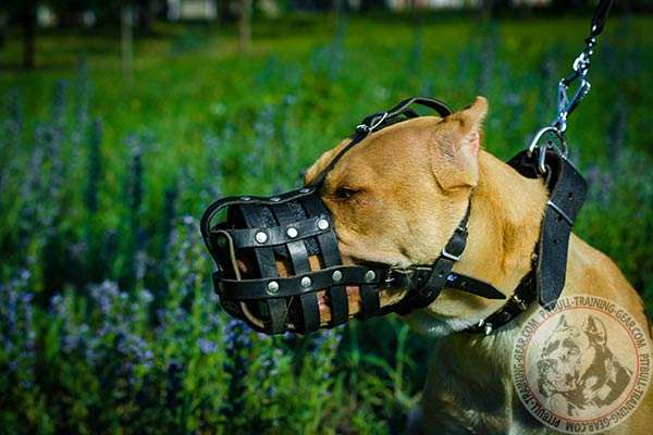 Pitbull leather basket muzzle for air circulation with traditional buckle for walking