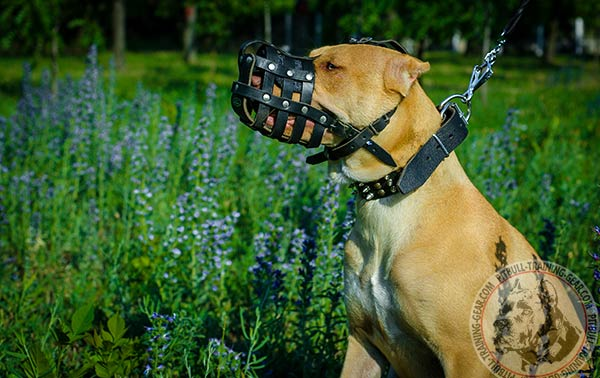 Pitbull leather basket muzzle free breathing with riveted hardware for daily activity