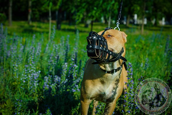 Pitbull leather basket muzzle ventilated with nickel plated hardware for quality control