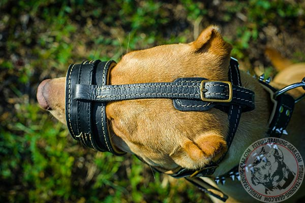 Pitbull leather muzzle easy-to-adjust with brass plated fittings for improved control