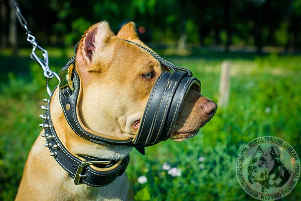 Pitbull leather muzzle free breathing with riveted hardware for quality control