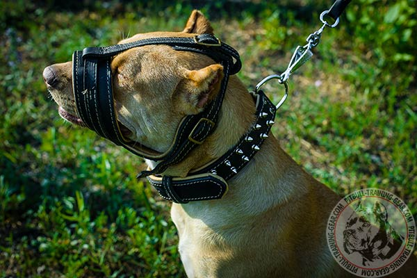 Pitbull leather muzzle adjustable  with brass plated hardware for daily walks