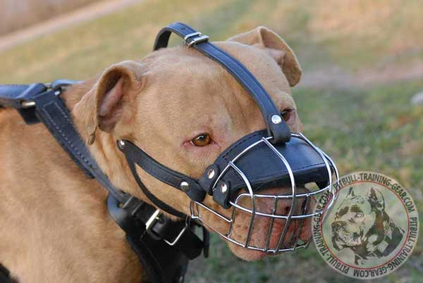 Pitbull Muzzle Basket Padded with Heavy Felt