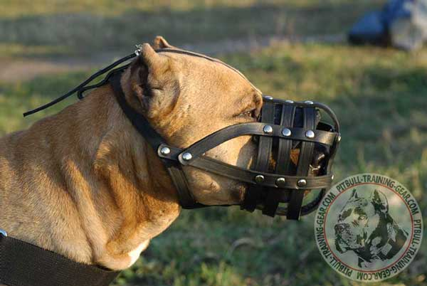 Pitbull Muzzle Extra Durable for Regular Wear
