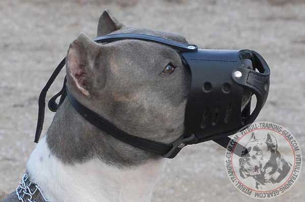 Pitbull Muzzle Leather with Adjustable Straps