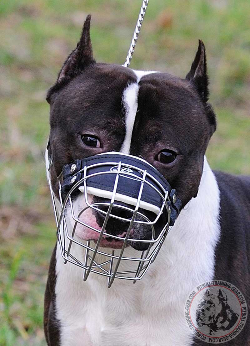Buy Adjustable Wire Basket Pitbull Muzzle   Dog Training Gear