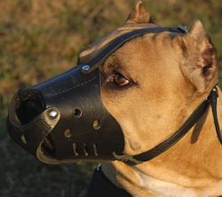 Handmade Anti-Barking Leather Dog Muzzle for American Pit Bull Terrier customer feedback