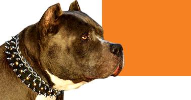 Choose Right Dog Collar for Pitbull