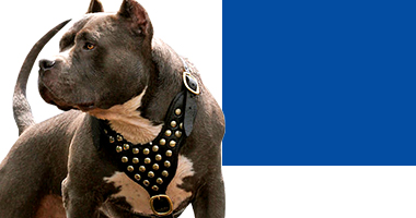Choose Right Pitbull Harness