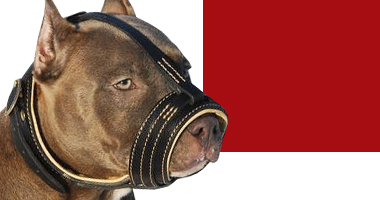 Choose right muzzle for Pitbull dog