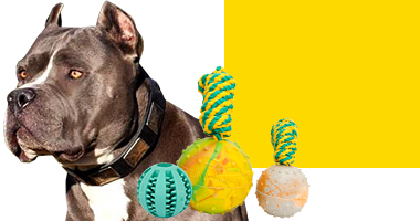 Get Dog Toys for your dog