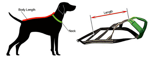 how to measure dog harness