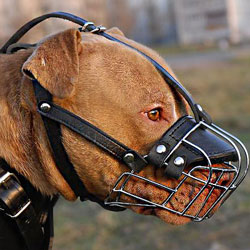 American Pit Bull Terrier Big Wire Basket dog muzzle