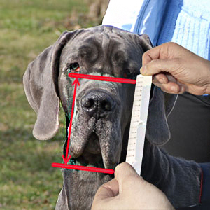 Appropriate measuring of your dog's snout
