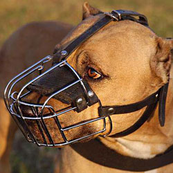 American Pit Bull Terrier Wire Basket dog muzzle
