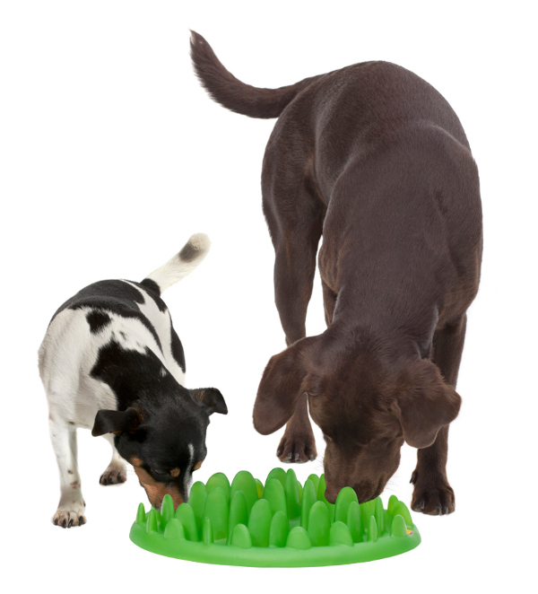 Big Dog Feeder for different breeds
